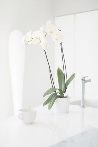 photo d'illustration pour le coullissant ClairéA montrant deux fleurs dans vase