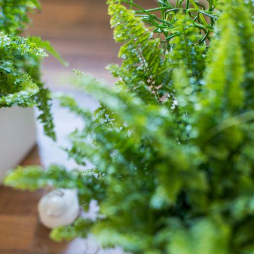 photo d'illustration de la porte d'entrée PricéA PVC petite plante verte sur parquet