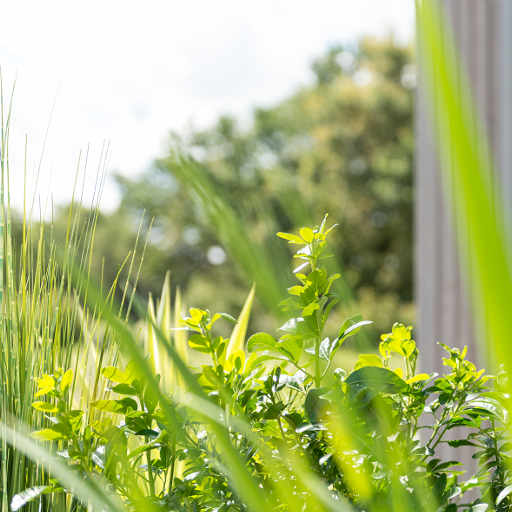 photo porte d'entrée PVC menuisé, vue de plantes